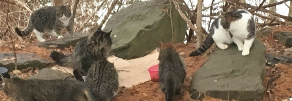 ad68001bb868 A colony of cats is a group of feral or free-roaming cats that share a  territory. This territory is usually focused on a source of food and water.